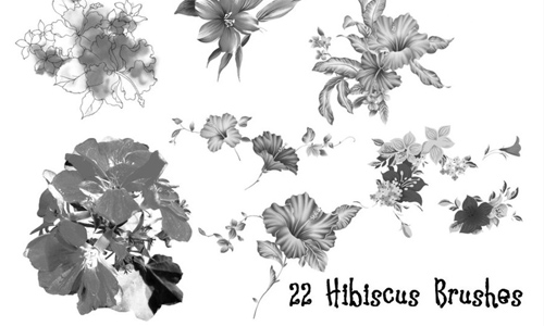 Realistic free hibiscus brushes
