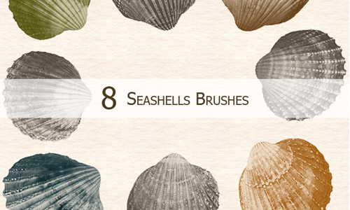 seashells shells photoshop brushes