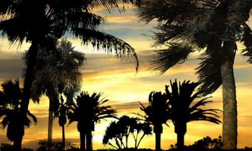Large free palm tree brushes