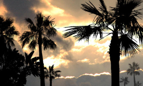 Creative free palm tree brushes