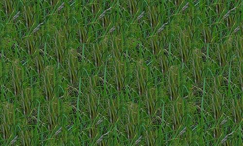 long seamless grass textures free