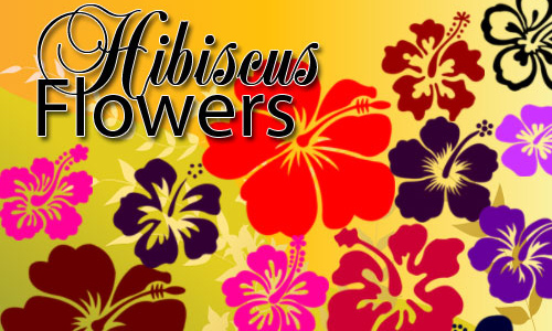 Photoshop free hibiscus brushes