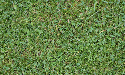 dirty seamless grass textures free