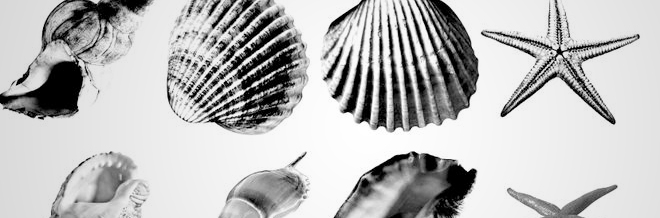 22 Stunning Shells Brush Sets For Photoshop