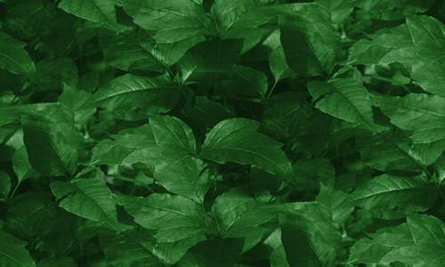 Green seamless leaf texture