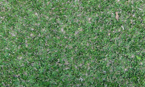 hi resolution grass textures