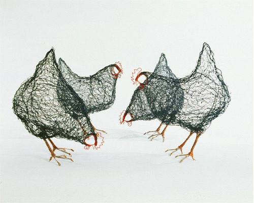 chicken wires Celia Smith featured