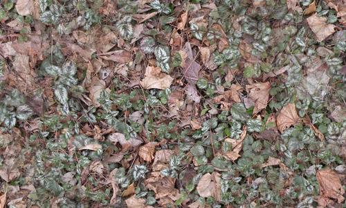 Leaf ground texture seamless