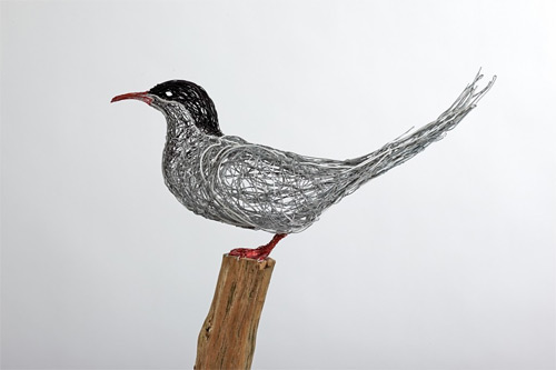 artic tern wires Celia Smith featured