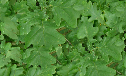 Hi res green leaf texture