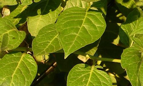 Tile leaf texture
