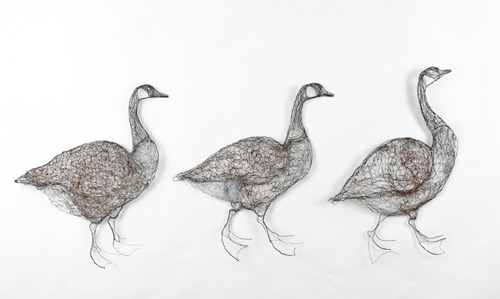 geese wires Celia Smith featured