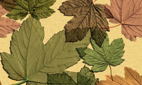 Maple leaf texture seamless