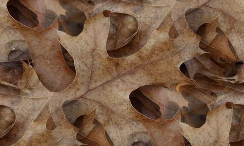 Brown leaf texture