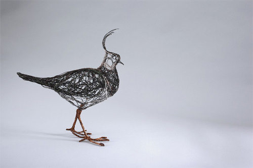 walking lapwings wires Celia Smith featured