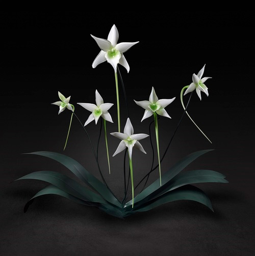 wihte flower glass art Jason Gamrath featured