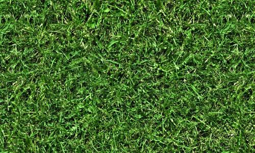 turf textures grass
