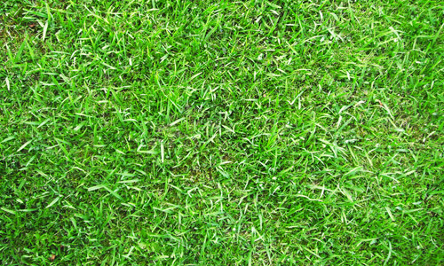 bright green grass textures