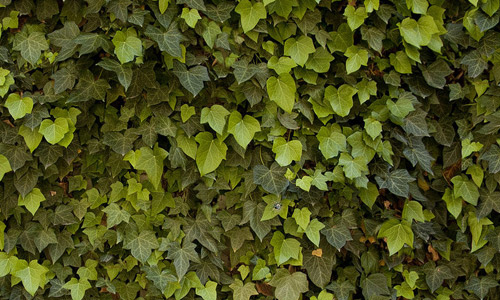 Free Seamless Leaf Textures For Your Nature Inspired Designs