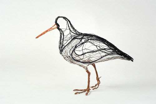 oystercatcher wires Celia Smith featured