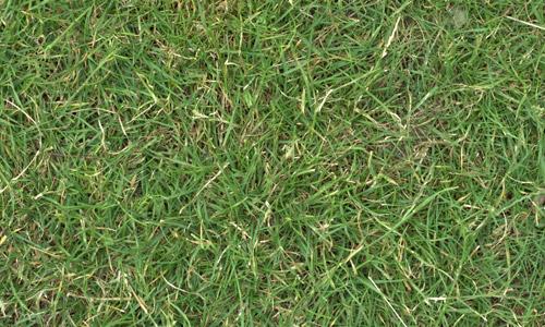 grass textures free