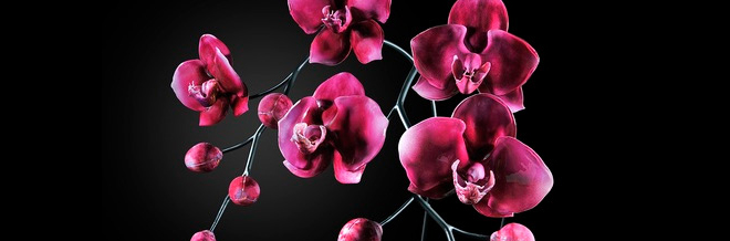 Adorable Large-Scale Flowers Made With Glass
