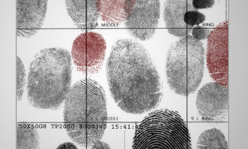 fingerprinted brushes free