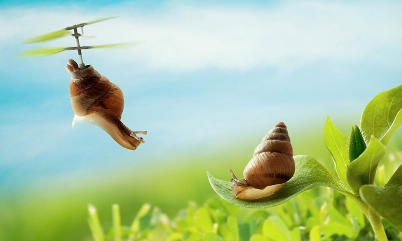 snail animated photography