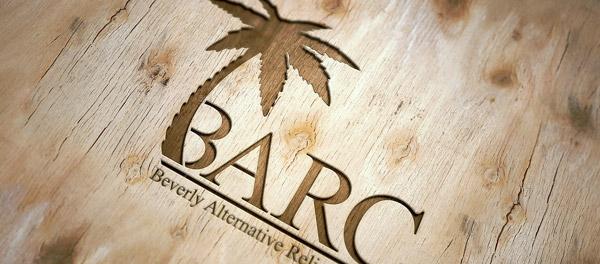 palm tree branding