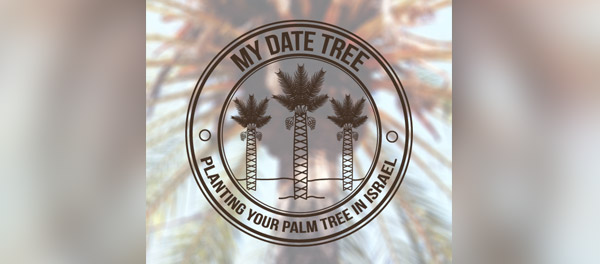 palm tree planting