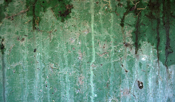 green wall paint